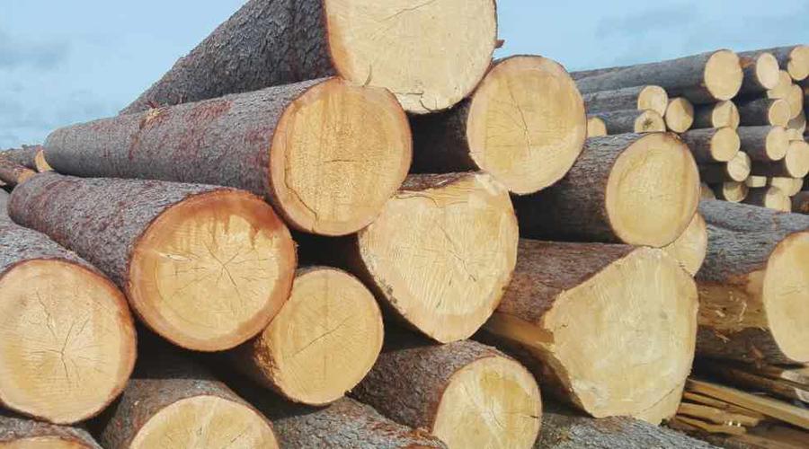 2018年第一季度欧盟木材进口遇瓶颈