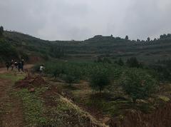 高坪3万亩青花椒基地常年直供各品质干花椒