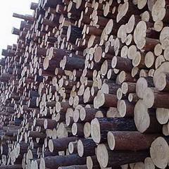 俄罗斯进口樟子松原木36cm  6m