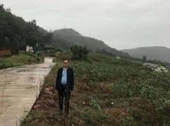 新庙1350亩平昌青花椒2020年新货(可议价)