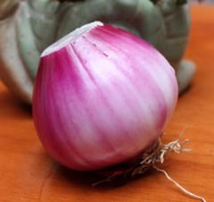 西昌紫皮洋葱(统货批发)【减价】