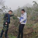 佛楼镇高峰1200亩平昌青花椒基地直销(可议价)