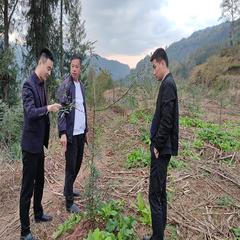 镇龙镇民兴120亩平昌青花椒基地直销(可议价)