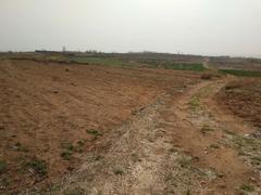 山东 文登 张家产 50亩 耕地 出租 600元/亩/年