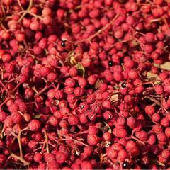 汉源清溪乡9月鲜红花椒5000公斤  第一场拍卖