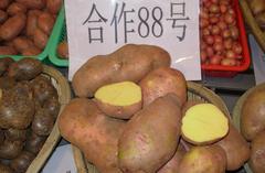 马铃薯合作88 200g天使薯业