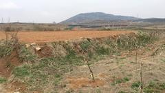 山东 文登 张家产 150亩 耕地 出租 600元/亩/年 (黄色)