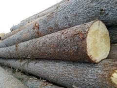 进口白松原木
