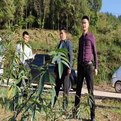 喜神社区500亩平昌青花椒基地直销(可议价)