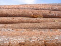 红松原木40-50cm