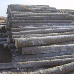 俄罗斯进口原木冷杉25cm