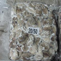 盘冻印度小墨鱼 原料(20-50)