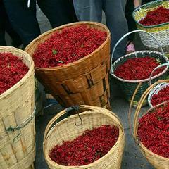 汉源宜东乡9月鲜红花椒8000公斤  第二场拍卖