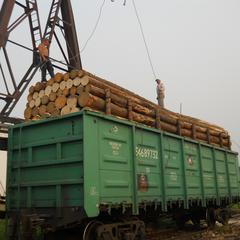 俄罗斯进口原木云杉25cm