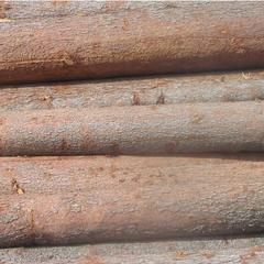 俄罗斯进口原木云杉34cm