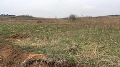 山东 文登 张家产 120亩 耕地 出租 600元/亩/年 (黄色)