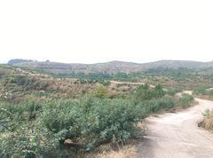 达州万隆锦绣15000亩青花椒基地常年供应干花椒