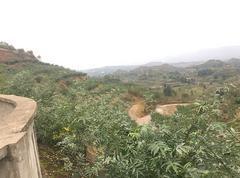 渠县1.5万亩青花椒基地直供干花椒(常年供应请致电)