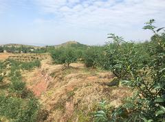 宣汉7000亩青花椒基地直供(常年供应干花椒)