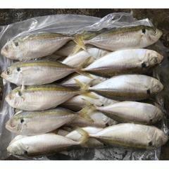 板冻金线池鱼 黄尾 印尼进口