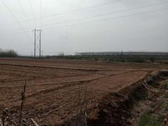 山东 文登 张家产 150亩 耕地 出租 600元/亩/年