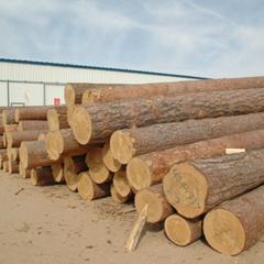 俄罗斯进口樟子松原木40cm