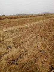 山东 文登 张家产 65亩 耕地 出租 400元/亩/年